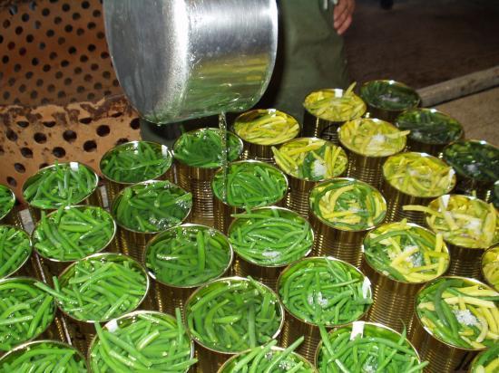 Conserves de haricots verts